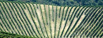 port wine region